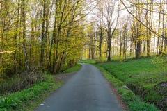 Lasowy wiosna krajobraz - rząd sosnowej wiosny lasowi drzewa i wąska ścieżka zaświecał miękkim wiosny światłem słonecznym Lasowa  Fotografia Royalty Free