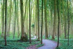Lasowy wiosna ślad Obrazy Royalty Free