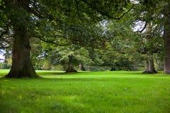 lasowy wzrostowy stary Obrazy Stock