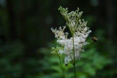 Lasowy życie fotografia stock