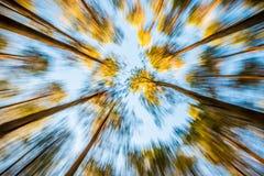 Lasowy zbliża wewnątrz Zdjęcie Royalty Free
