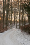 lasowy zmierzch obrazy royalty free