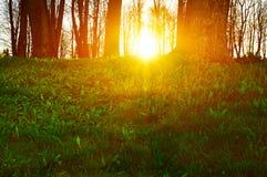 Lasowy zmierzchu krajobraz - lasowi drzewa przy zmierzchem fotografia royalty free
