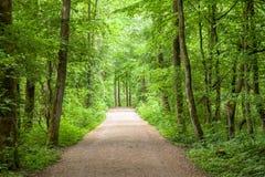 Lasowych drzew Footpath Parkowa wiosna Obraz Stock