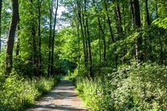 Lasowych drzew Footpath Parkowa wiosna Fotografia Royalty Free