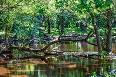 Lasowych drzew odbicie w wodzie Fotografia Royalty Free