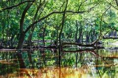 Lasowych drzew odbicie w wodzie Zdjęcie Stock