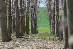 Lasowych drzew tunel Zdjęcia Royalty Free