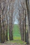 Lasowych drzew tunel Fotografia Royalty Free