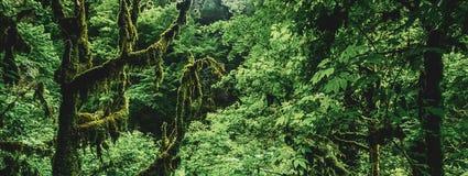 Lasowych rośliien zielony życie fotografia royalty free