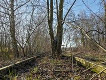 Lassen Sie alte verrostete Bahnlinie mit Anlagen nach innen lizenzfreie stockfotografie