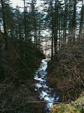 Lassen Sie Fluss laufen Stockbilder