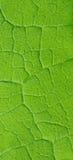 Lassen Sie natürlichen mit Blumenhintergrund Lizenzfreies Stockfoto