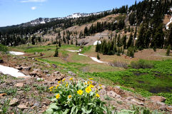 Lassen spring. Spring mountain terrain with flowers at Lassen National Park royalty free stock photography