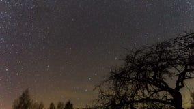 Lasso di tempo alla notte con la stella polare stock footage