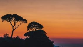 Lasso di tempo, bella regolazione del sole di tramonto dietro gli alberi sulle colline dell'Italia a Sorrento, posto della rafia  archivi video