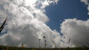 Lasso di tempo Cielo nuvoloso sopra il prato L'ape si siede su un fiore Vista grandangolare stock footage