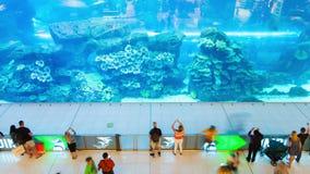 Lasso di tempo dell'acquario del centro commerciale Dubai Pentola su archivi video