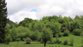 Lasso di tempo della foresta della molla in campagna pirenaica, Francia stock footage