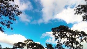 Lasso di tempo della nuvola in cielo blu stock footage
