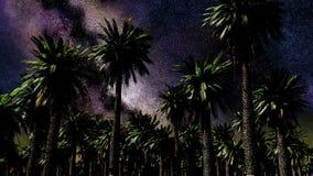 Lasso di tempo della stella, galassia della Via Lattea che si muovono attraverso il cielo notturno e palme stock footage