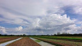 Lasso di tempo delle nuvole bianche con cielo blu sopra il diagramma di verdure archivi video
