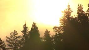 Lasso di tempo di alba di estate con foschia e le nuvole di spostamento nella montagna archivi video