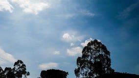 lasso di tempo 4K del movimento delle nuvole con la siluetta dell'albero video d archivio