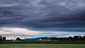 Lasso di tempo, Timelapse, paesaggio rurale al rallentatore del giacimento di grano e vigna nel sud della Spagna Sera di estate archivi video