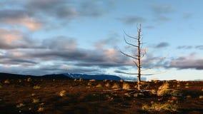 Lasso di tempo Tramonto sul territorio di ramo secco - l'area, coperto di strato di cenere vulcanica imballata Parco del turista  archivi video