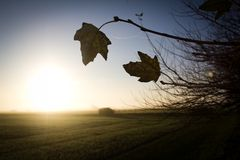 Last of autumn Royalty Free Stock Photography