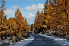 Last autumn in the Altai Mountains stock image