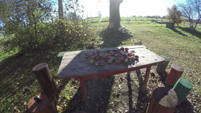 Last autumn apples on garden table in farm and tree shadow in sunlight. Timelapse 4K. Last autumn apples on garden table in farm and tree shadow motion in stock video