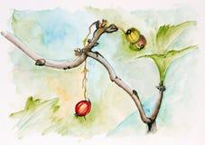 Last autumn berry concept Stock Images