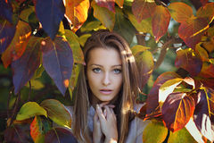 Last autumn colors Royalty Free Stock Photo