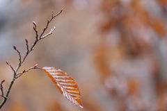 Last Autumn leaf Stock Photography