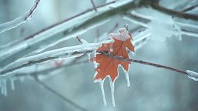 Last autumn leaf on a tree branch in the icy snow2