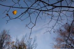 Last autumn leave Royalty Free Stock Image