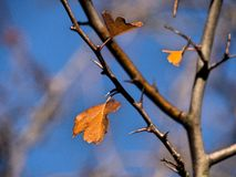 Last autumn leaves. Details of one of the last autumn leaves. Brightly colored Stock Photo