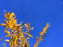 Last autumn leaves Royalty Free Stock Images