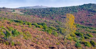 Last autumnal colors in the catalan highlands. At the Pla de la Calma highland plateau in northeastern Catalonia, the highlights of autumnal colors are giving stock images