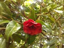 Last blossom of the season. Stock Image