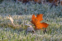 Last color of Fall Royalty Free Stock Photography