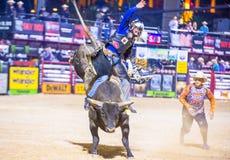 Last Cowboy Standing Stock Image