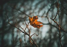 Autum end stock photography