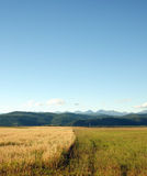 The last days of summer. Agricultural landscape. The boundary between the fields with unharvested grain harvest. Royalty Free Stock Photos