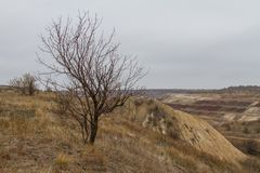 The last days in the Tavrian steppe. The last days of warm autumn before the terrible frosts in the Tavrian steppe. Zaporizhia region, Ukraine. November 2018 royalty free stock photography
