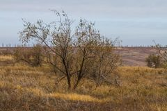 The last days in the Tavrian steppe. The last days of warm autumn before the terrible frosts in the Tavrian steppe. Zaporizhia region, Ukraine. November 2018 stock photos