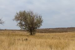 The last days in the Tavrian steppe. The last days of warm autumn before the terrible frosts in the Tavrian steppe. Zaporizhia region, Ukraine. November 2018 stock photography