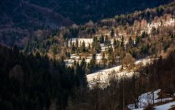 Last days of winter in forest landscape Stock Photography